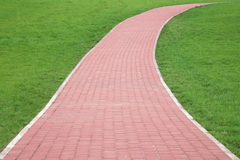 путь травы стоковые фото