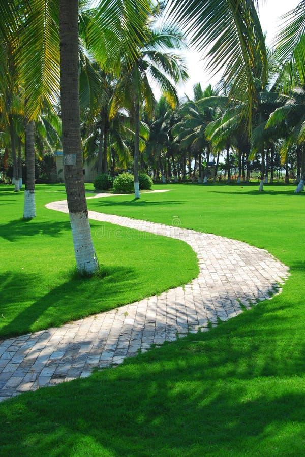 путь травы стоковое изображение