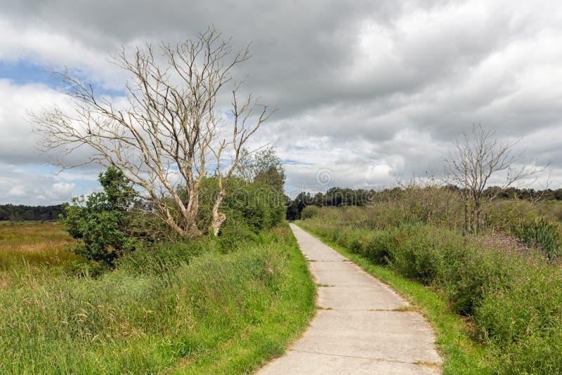 Путь цикла в голландском национальном парке с полями и заболоченными местами стоковая фотография rf