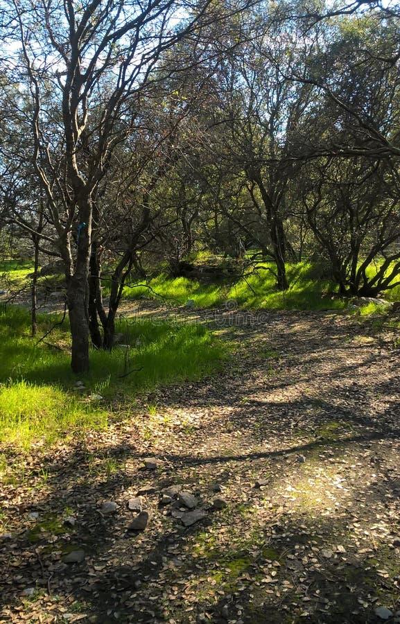 Путь через деревья спать стоковые изображения
