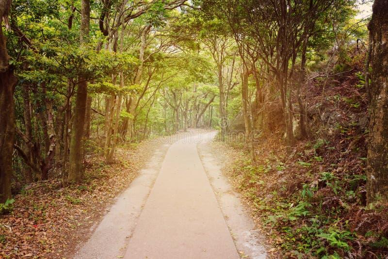 Путь через древесины лета стоковые изображения