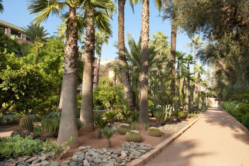 Путь через красивый сад, Marrakesh стоковая фотография rf