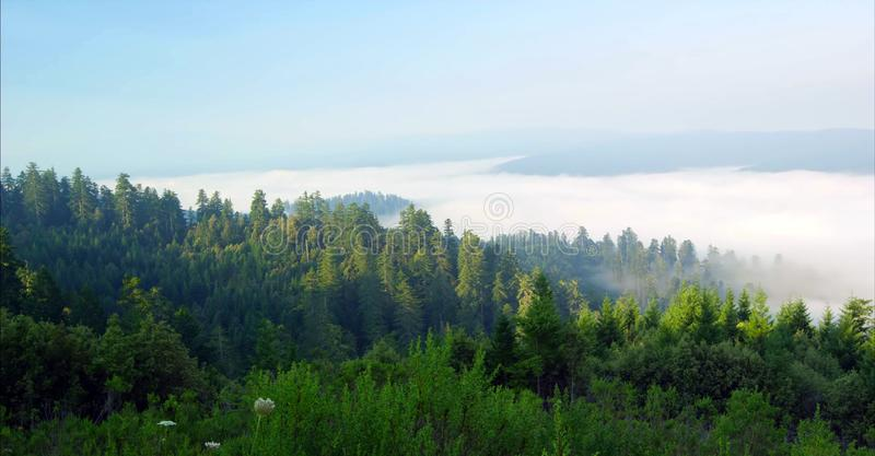 Путь через лес, соотечественник Redwoods & парки штата, Калифорния стоковое фото