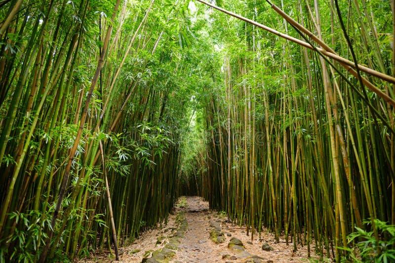 Путь через плотный бамбуковый лес, водя к известному Waimoku падает Популярный след Pipiwai в национальном парке Haleakala на Мау стоковые изображения rf