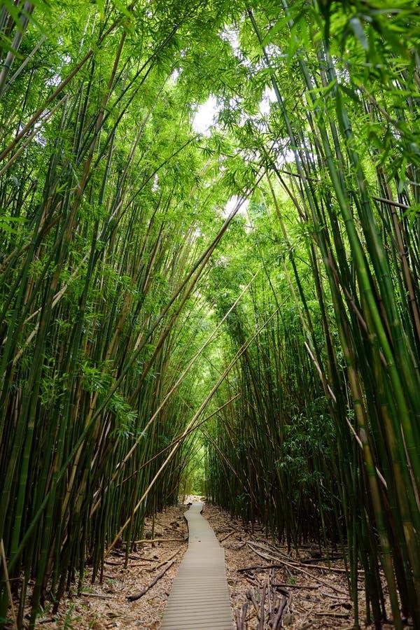 Путь через плотный бамбуковый лес, водя к известному Waimoku падает Популярный след Pipiwai в национальном парке Haleakala на Мау стоковое изображение rf