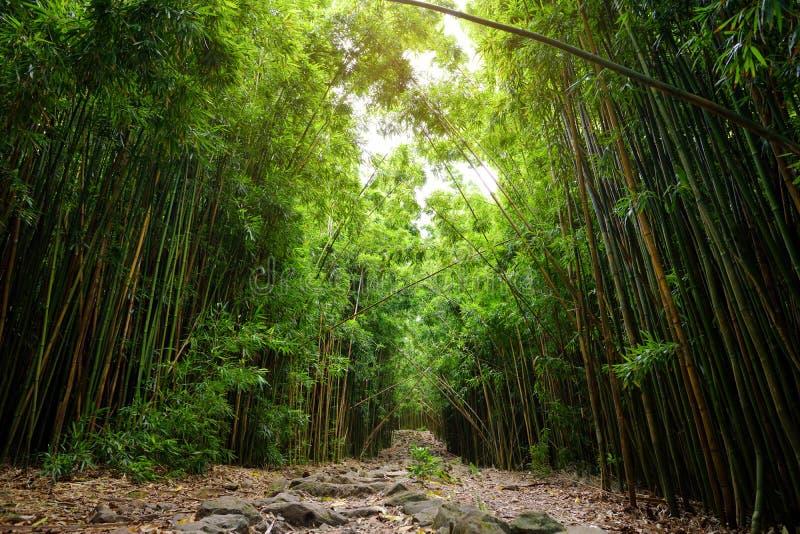 Путь через плотный бамбуковый лес, водя к известному Waimoku падает Популярный след Pipiwai в национальном парке Haleakala на Мау стоковые фото