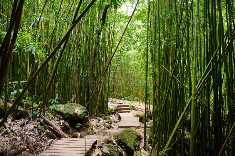 Путь через плотный бамбуковый лес, водя к известному Waimoku падает Популярный след Pipiwai в национальном парке Haleakala на Мау стоковая фотография rf