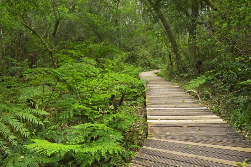 Путь через тропический лес в трассе NP сада, Южной Африке стоковые изображения rf