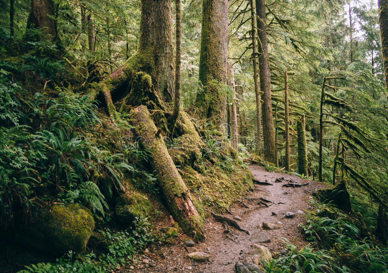 Путь через Mt Национальный лес хлебопека-Snoqualmie стоковое изображение rf