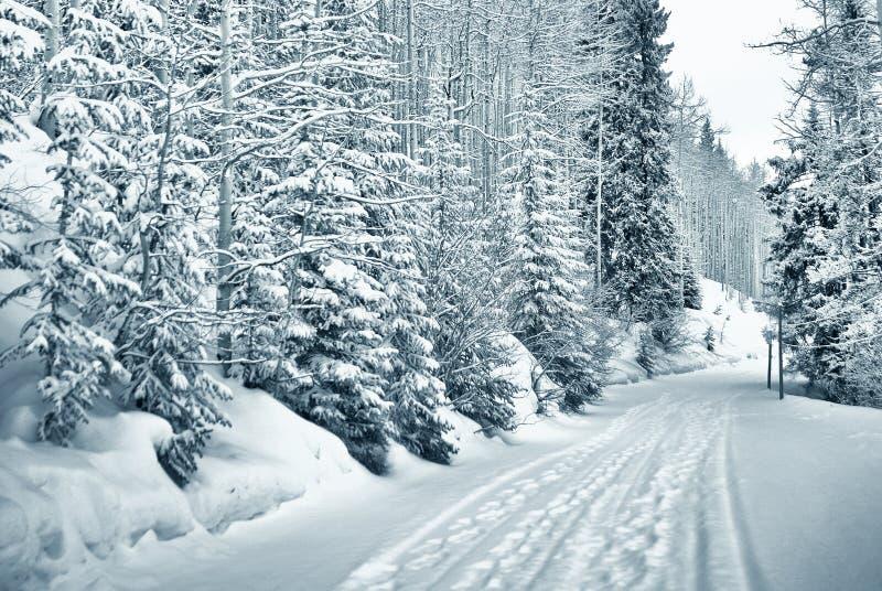путь 4 9 снежный стоковое изображение rf