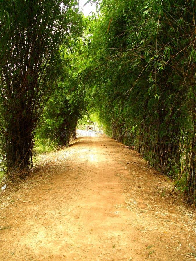 путь 6 бамбуков стоковые фото