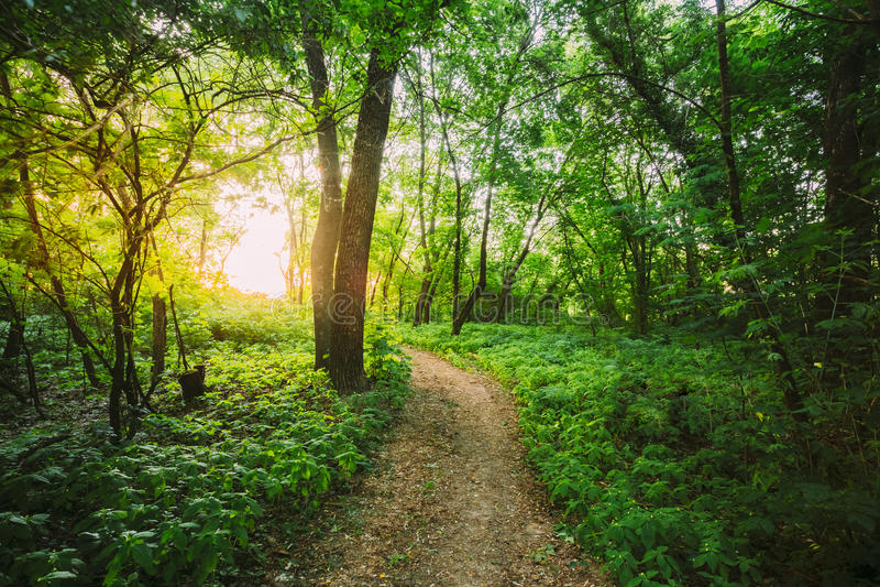 Путь Greenwood идя к заходу солнца через рост Мал-зацветенный Касани-мне-Не стоковое фото rf