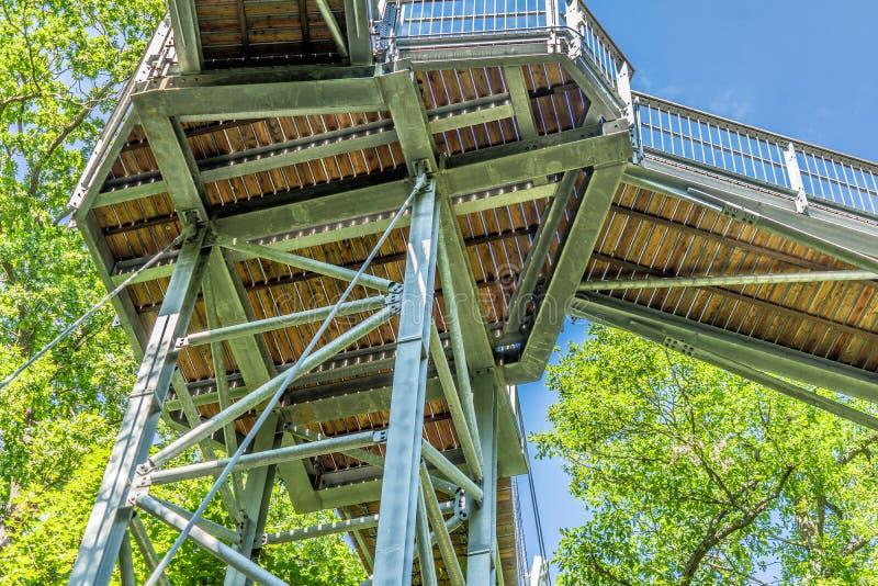 Путь Treetop через смешанный лес на северном крае Harz, взгляде снизу к поддержкам и деревянным планкам стоковые фотографии rf