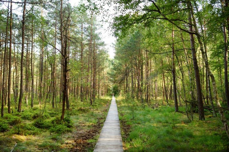Путь Varnikai когнитивный идя, водящ через самые красивые и едва ли самые доступные обнаруженные местонахождение места заповедник стоковое изображение rf