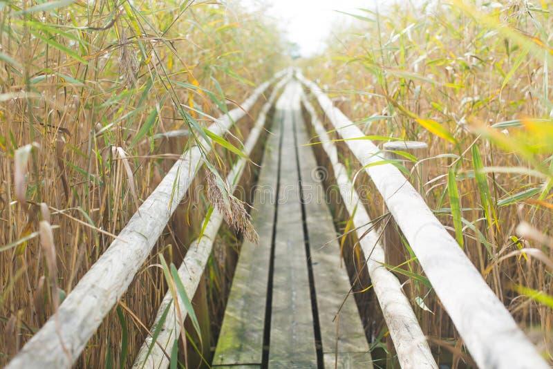 путь yosemite национального парка стоковое фото