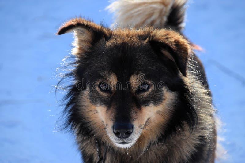 Пушистая собака в солнце против голубой снежной предпосылки стоковое изображение rf