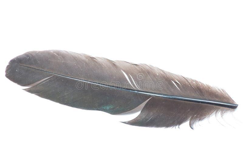 Пушистое перо стоковое фото