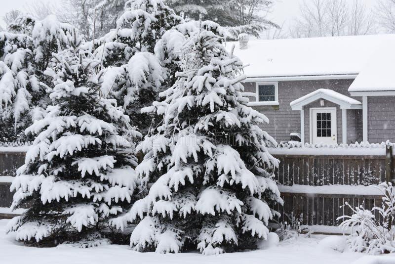 Пушистое thefir-дерево покрытое с снегом около малого уютного дома стоковая фотография rf
