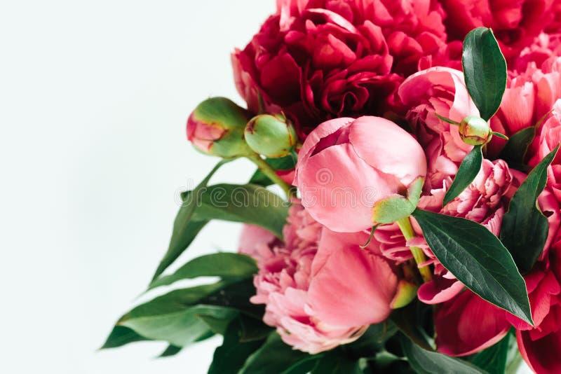 Пушистые живущие пионы коралла, предпосылка цветков стоковое изображение
