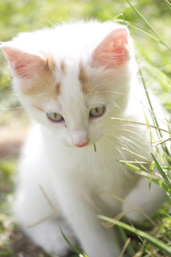 Пушистые котята стоковые изображения
