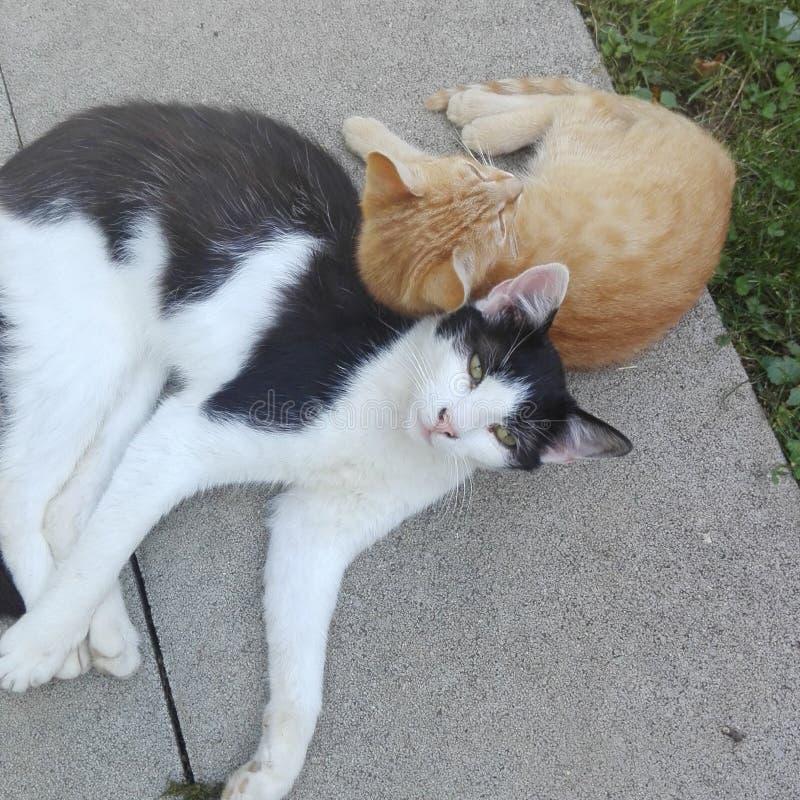 Пушистые маленькие коты стоковое изображение