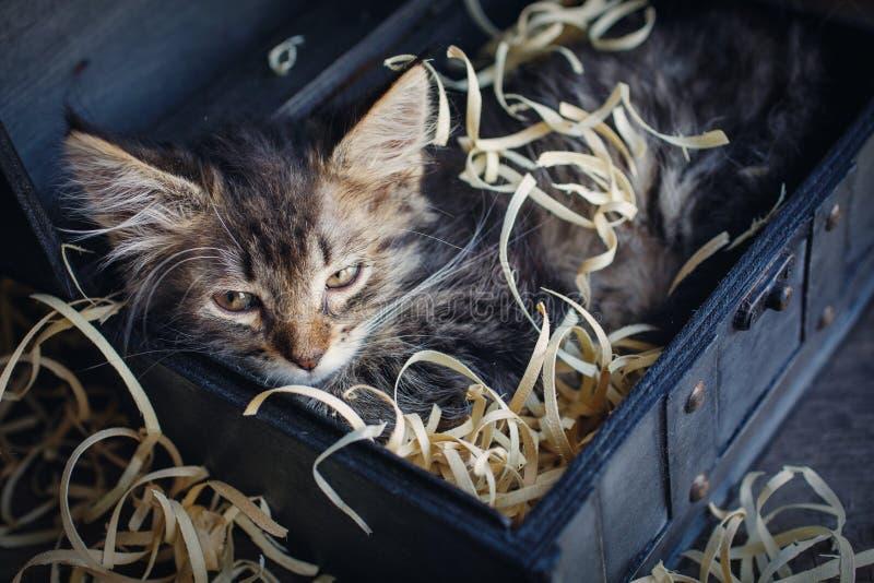 Пушистый котенок в открытом комоде стоковое фото