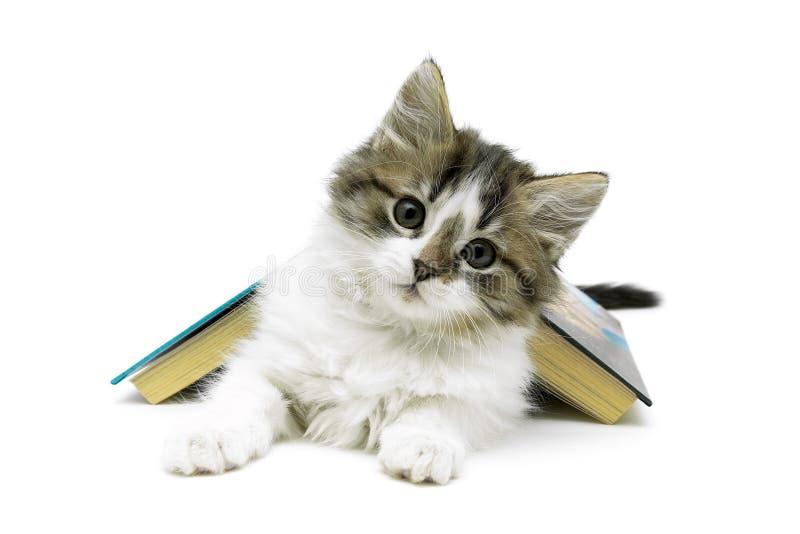 Пушистый котенок и открытая книга изолированные на белой предпосылке стоковые фото