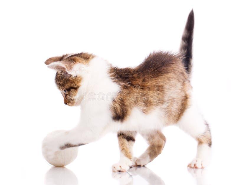 Пушистый котенок сыгранный с шариком o стоковые фотографии rf