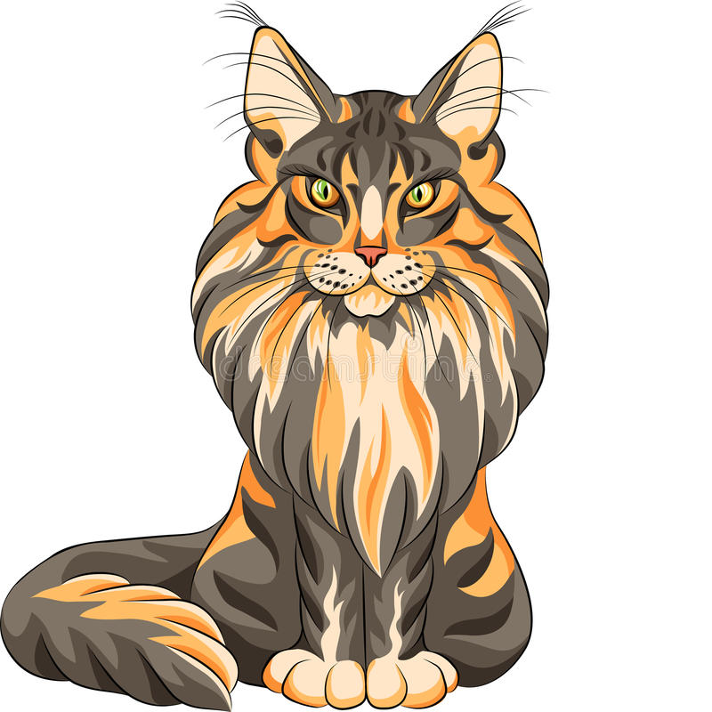 Пушистый кот енота Мэн бесплатная иллюстрация