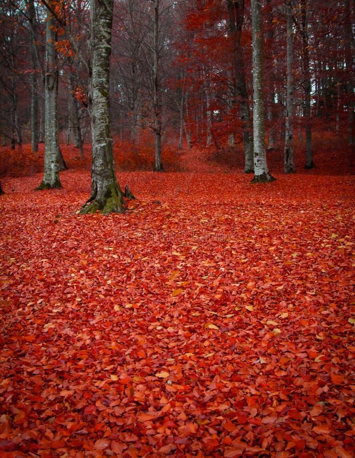 пуща выходит красный цвет стоковое фото rf
