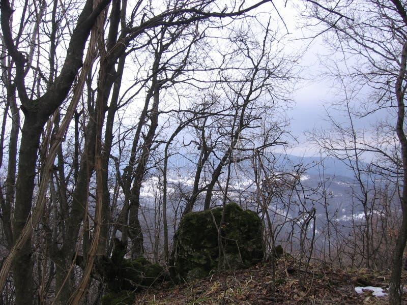 Пуща в зиме стоковая фотография