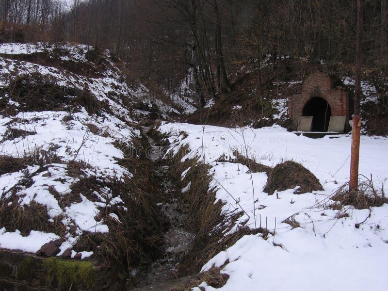 Пуща в зиме стоковое изображение rf