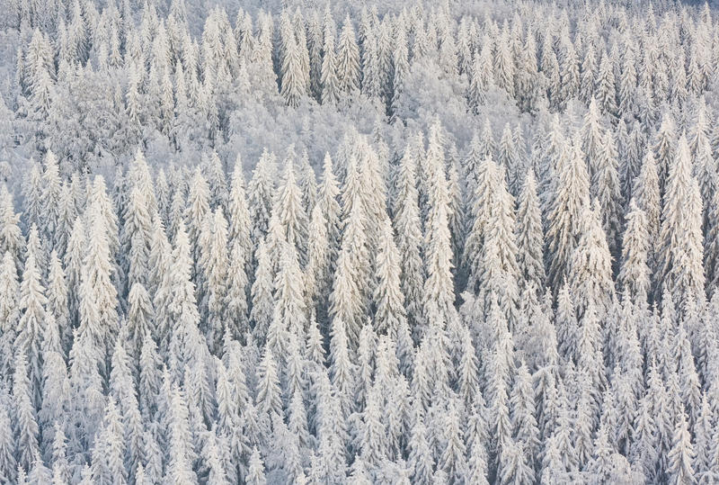 Пуща зимы в Финляндии стоковое изображение rf