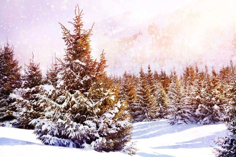 Пуща зимы елевая в горах стоковое изображение rf