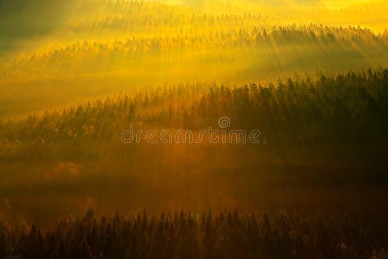 пуща излучает солнце Утро с солнцем Холодное туманное туманное утро в долине падения богемского парка Швейцарии Холмы с туманом,  стоковые фотографии rf