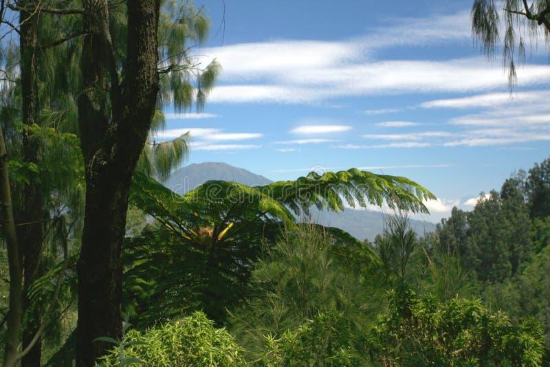 пуща Индонесия тропическая стоковые фото