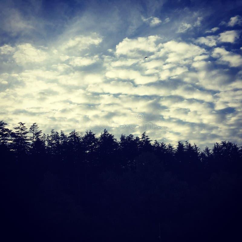 Пуща и небо стоковое фото rf
