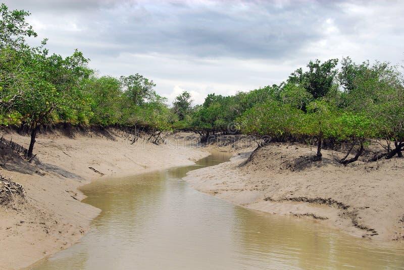 Пуща мангровы стоковые фотографии rf