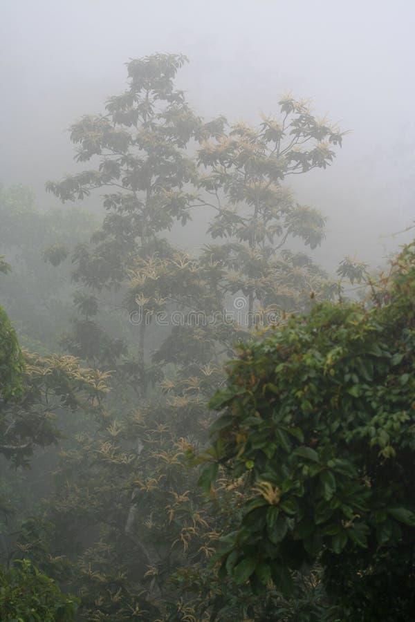 пуща облака стоковое фото rf