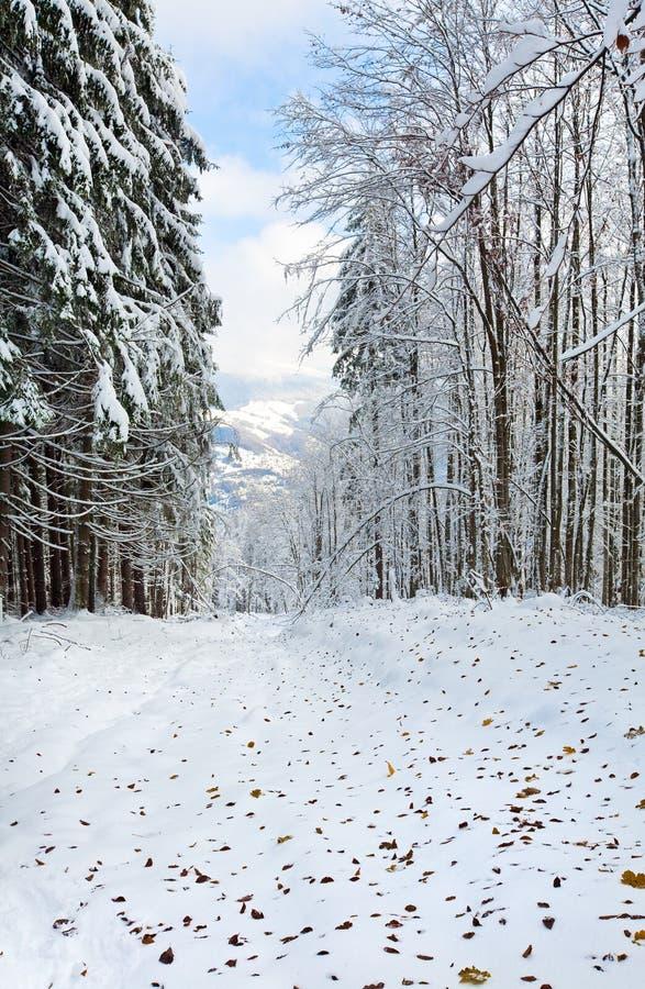 пуща осени первая последняя зима снежка листьев стоковая фотография