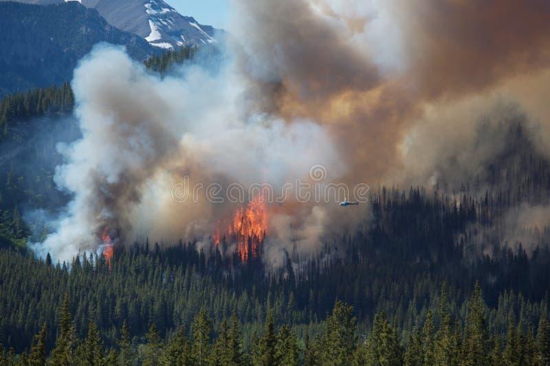 пуща пожара стоковое изображение
