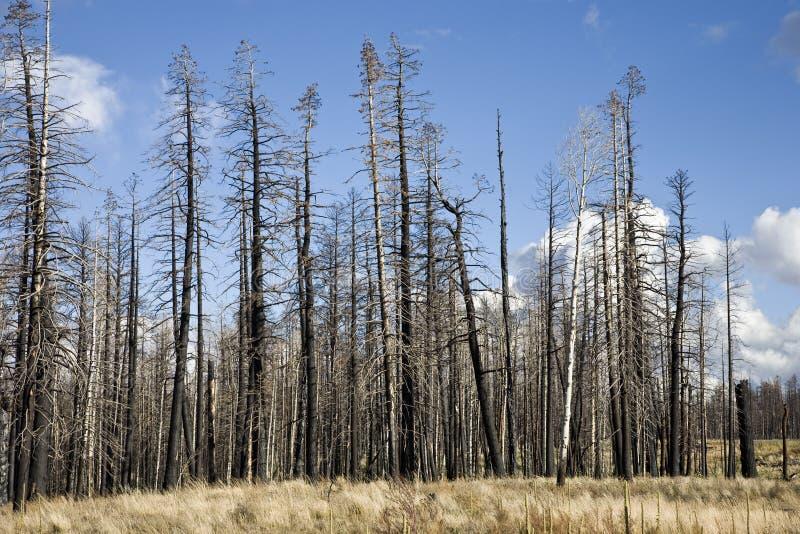 пуща пожара ag стоковое изображение