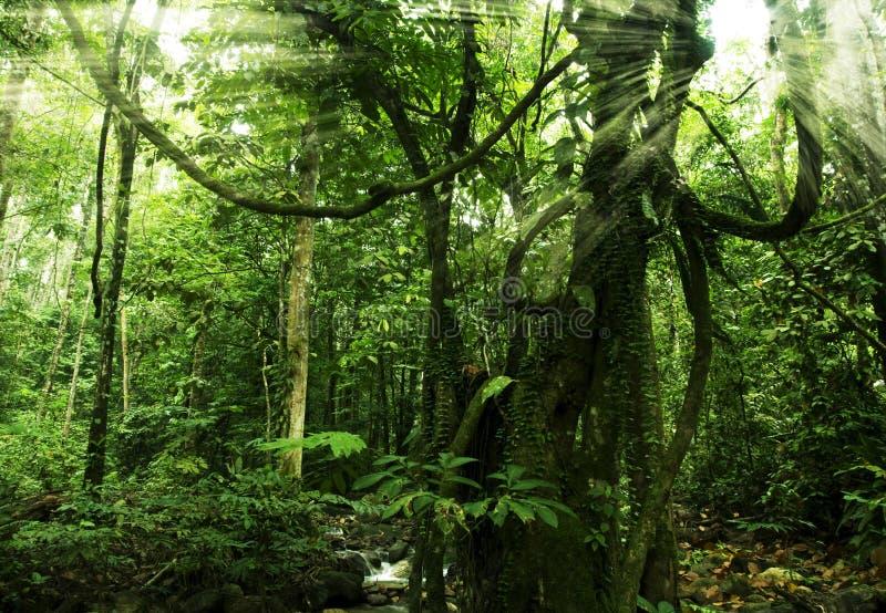 пуща тропическая стоковое изображение rf