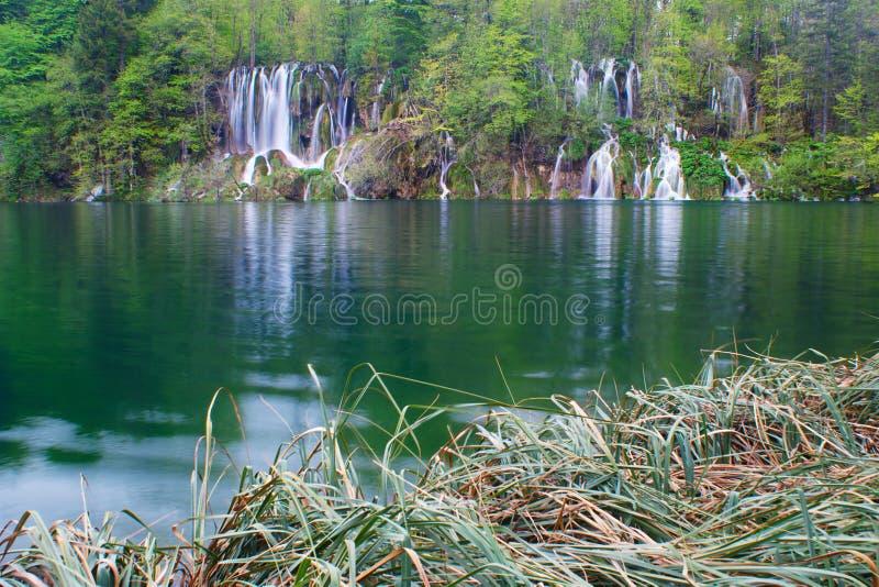 Пуща, тростники, озеро, и водопады весной стоковое фото