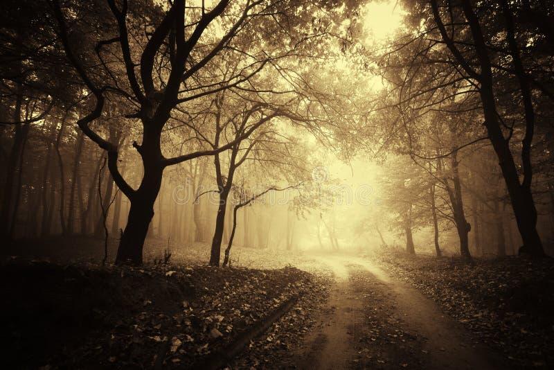 пуща тумана осени красивейшая золотистая стоковые изображения