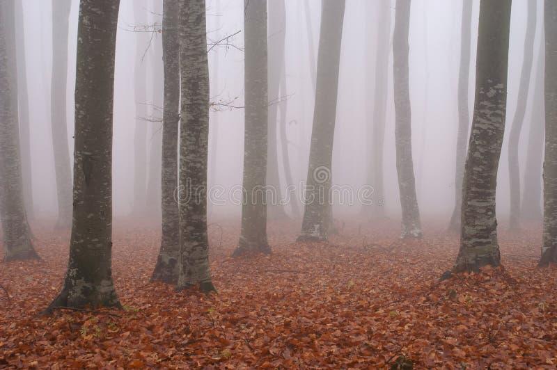 пуща тумана 4 стоковые изображения rf