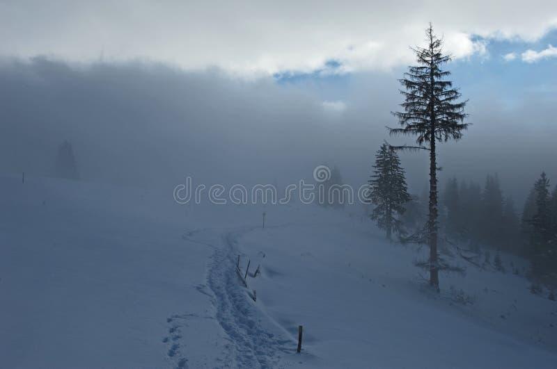 пуща шла снег стоковая фотография