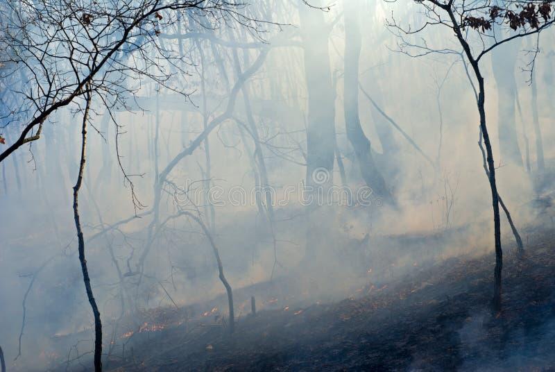 пуща 5 пожаров стоковые изображения rf