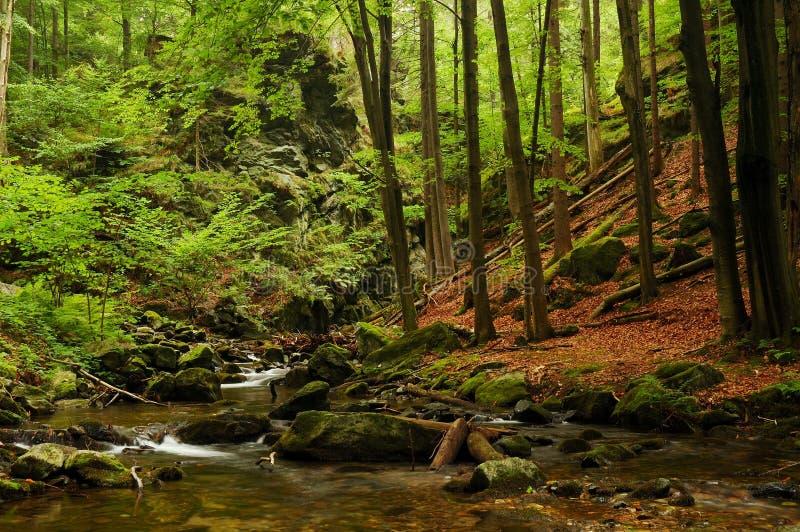 Download пуща стоковое фото. изображение насчитывающей greenery - 6855366