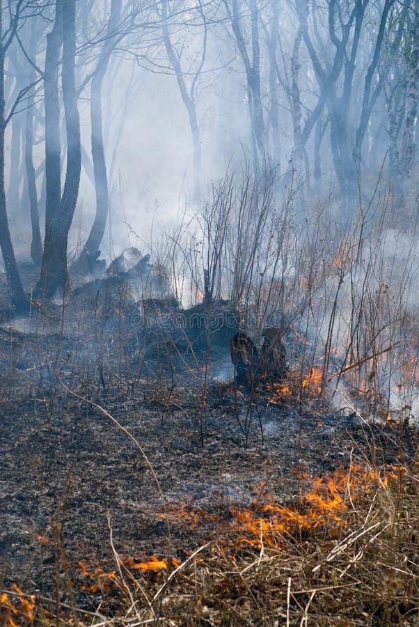 пуща 9 пожаров стоковые изображения